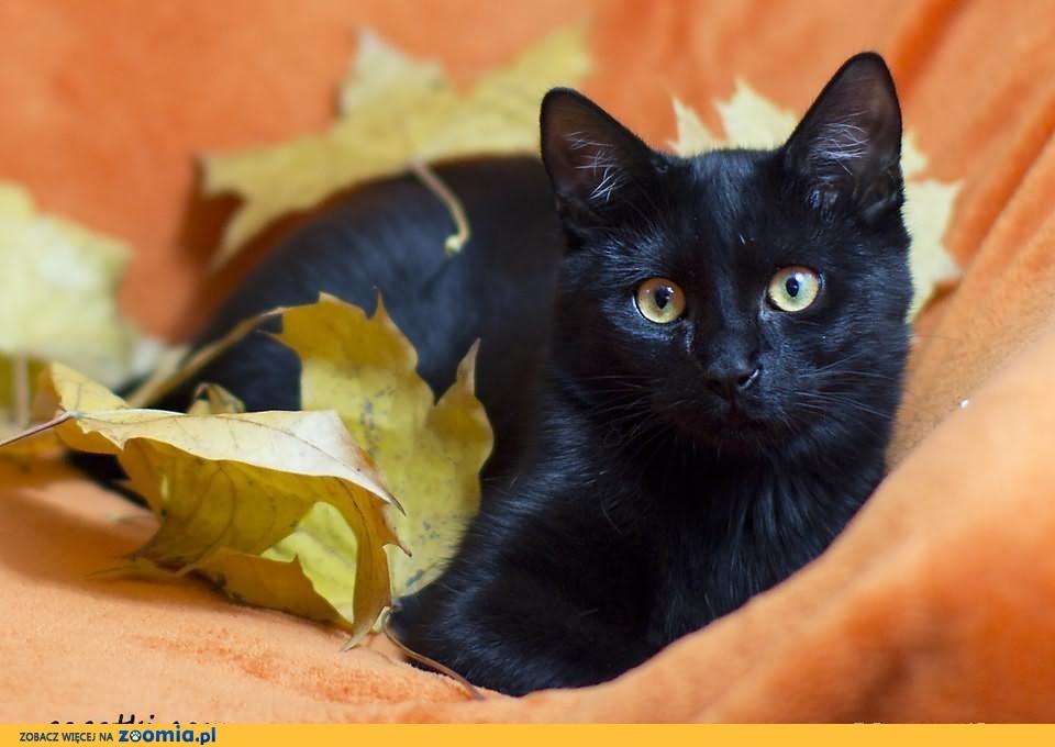 Mały czarny zwariowany kociak szuka domku! (Pń)