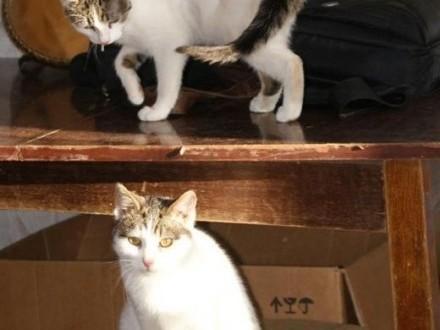 Łaciata kocia parka szuka nowego domu!   Koty pospolite cała Polska
