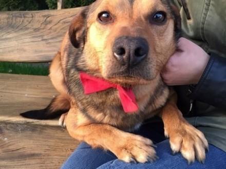 Niewielki Tofik  skrzywdzony przez człowieka psiak szuka domu