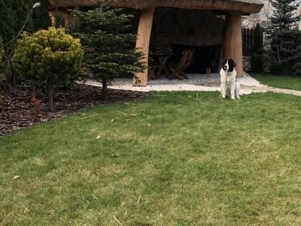 Szkolenie psów z dojazdem do klienta - Behawiorysta   małopolskie Kraków