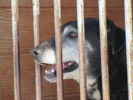 Siekierka  przyjazna i łagodna psinka prosi o Dom