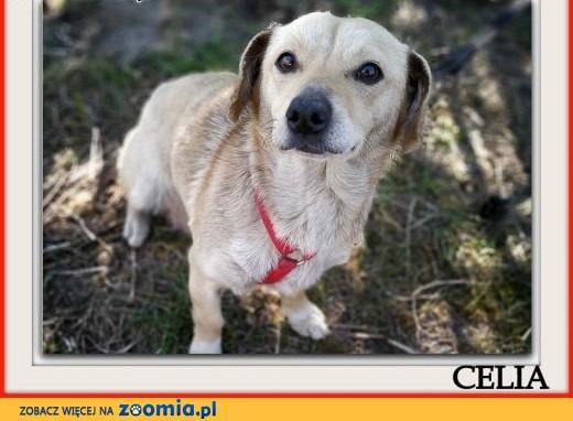 Mała 8 kg, rodzinna,grzeczna,łagodna,sterylizowana sunia CELIA.Adopcja ,  śląskie Katowice