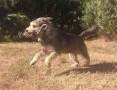 KAPSEL większy, uroczy, wrażliwy psiak szuka spokojnego DOMU,  dolnośląskie Wrocław