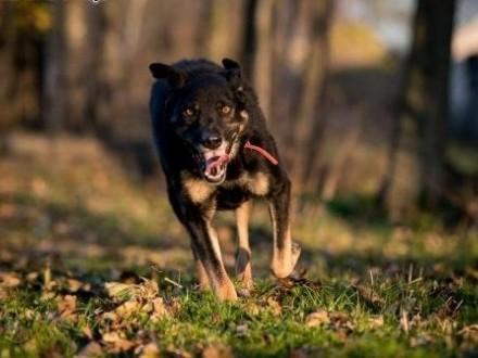 WŁODEK - taki pies  jak on - radością przystroi każdy dom:)   lubelskie Lublin