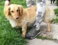 Falkor - cichutki, nienachalny, bardzo spokojny wielkouchy psiak szuka domu!,  małopolskie Kraków