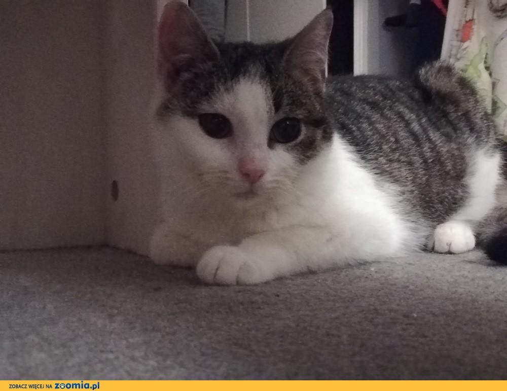 Koteczka Masza szuka domu