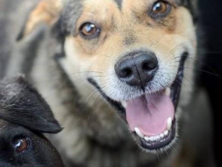 Roger  zawsze uśmiechnięty  młody psiak  przyjazny - adopcja