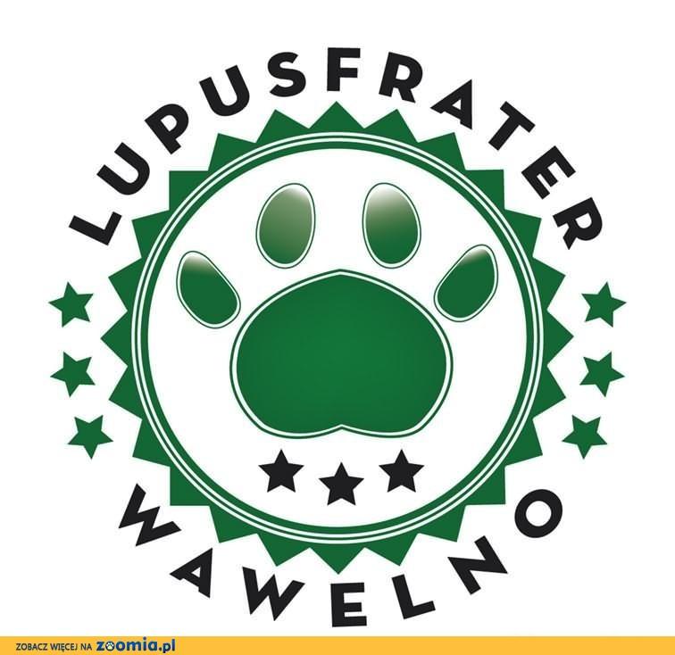 Szkolenie psów Lupus Frater - Bogacica (Praszka)