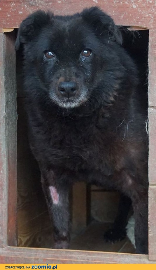 Kao - znaleziony w lesie wraz z bratem, czeka na dom