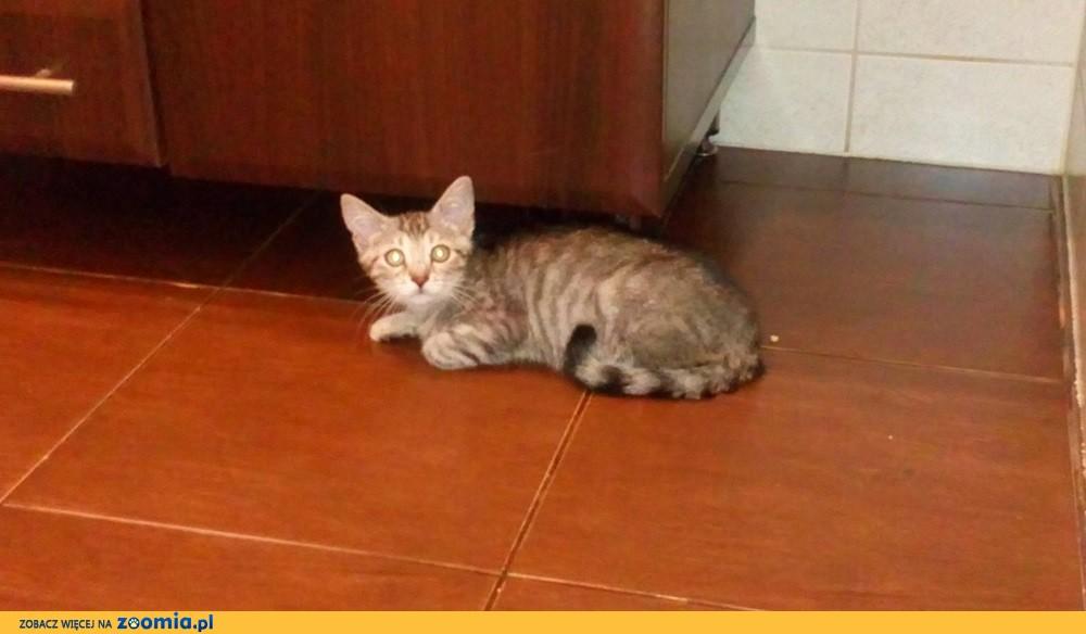 Mały kotek Cezar szuka domu