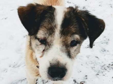 Romeo  cudowny  domowy psi dziadek do adopcji!