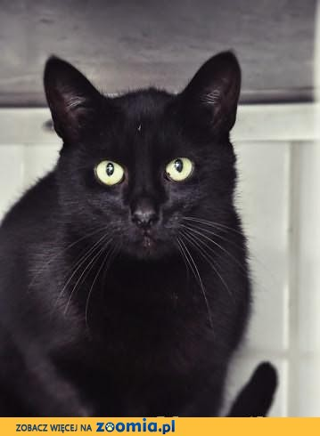 Wyjątkowy kot szuka wyjątkowego domu