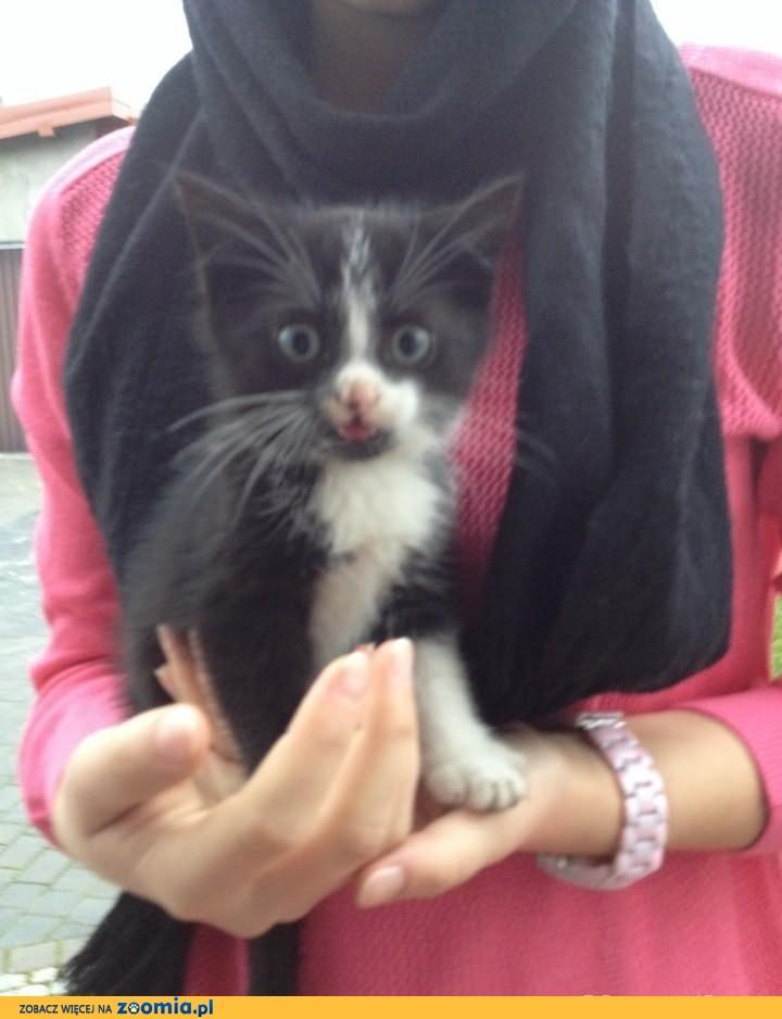 Oddam śliczne kotki !