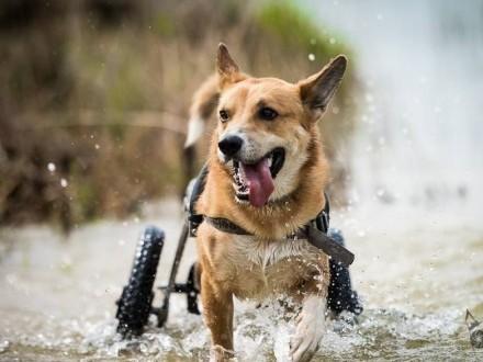 TOFFIK- psie szczęście na wózeczku