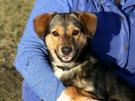 Radosny psiak Pongo szuka domu