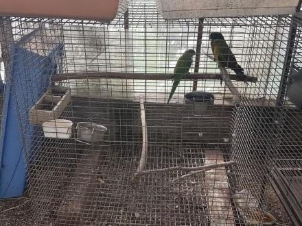 Klatka Dla Do Papug Papugi Duża Kakadu Ara