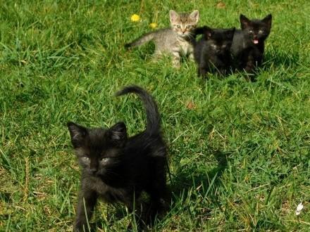 Oddamy małe kotki w dobre ręce   śląskie Lubliniec
