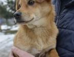 Olinek - Psie dziecko prosi o dom !!!,  pomorskie Wejherowo