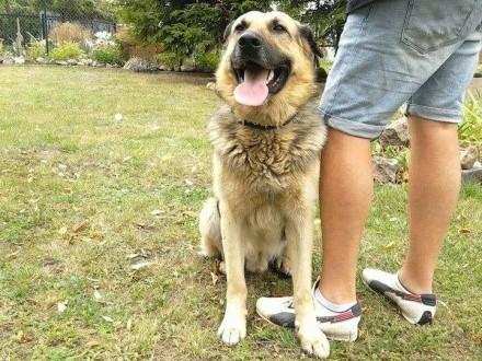 Pies w typie onka szuka domu