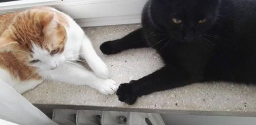 Stefan i Młody - 2-letnie kociaki szukają wspólnego domu!   mazowieckie Warszawa