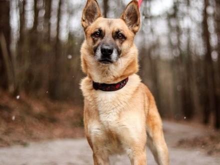 Piękny pies - to Fakt! :)   warmińsko-mazurskie Olsztyn