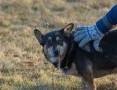 WethWeth, wyjątkowy pies szuka domu!