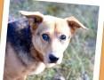 11 kg, łagodny, grzeczny, przyjacielski psiak LUCEK_Adopcja_