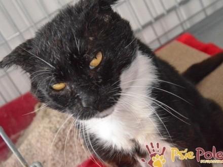 KOCURRO-piękny  duży  miły dojrzały kotek-szukamy DOMU