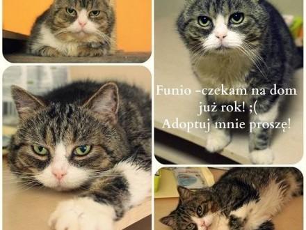 Funio - pozytywny Pan Kot