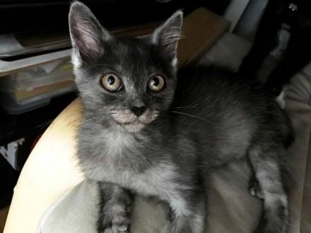DUSZEK-prześliczny młody kociak-3 miesiące-szukam troskliwego domu