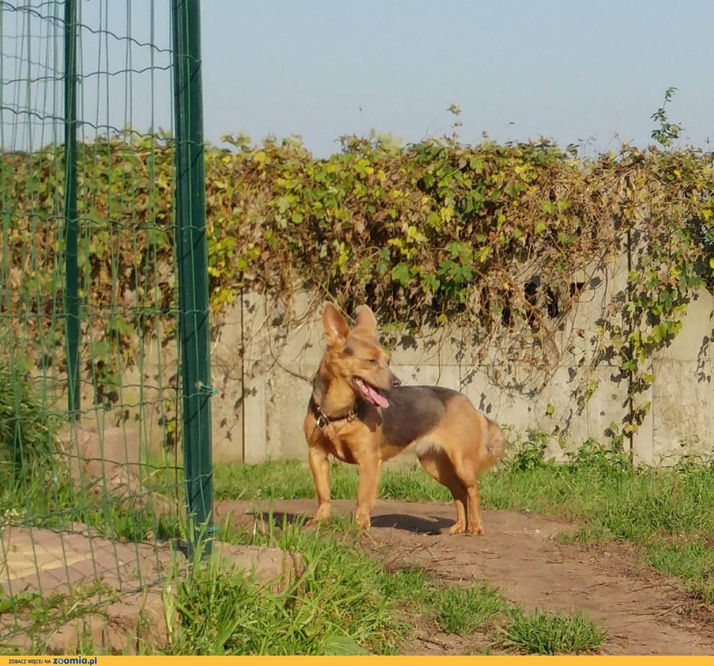 Rózia – czy można bardziej skrzywdzić psa?