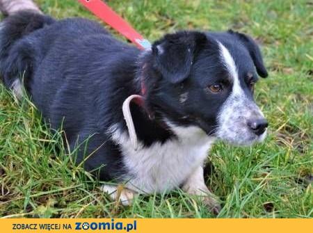 SMERF - nieduży, kochany psiak szuka dobrego domu,  mazowieckie Warszawa