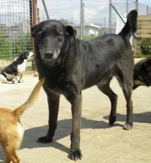 Rudolfik - cudowny pies tak długo czeka na dom___