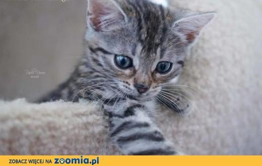 Kociak Zojka cudne maleństwo szuka kochającego domu!,  wielkopolskie Poznań