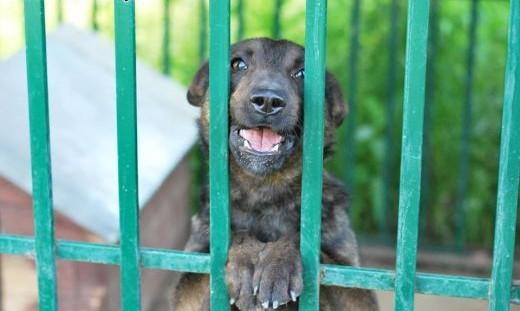 Lizak ;#8211; całuśny  radosny psiak szuka domu   mazowieckie Warszawa