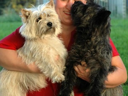 CAIRN TERRIER - kolorowy WESTHIGHLAND WHITE TERIER WESTI