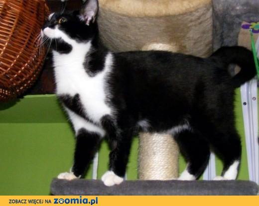 Słodziak kocha ludzi, koty i cały świat,  mazowieckie Warszawa