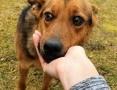 'OLAF - roczne, przerażone psie dziecko błaga o dom!,  mazowieckie Warszawa