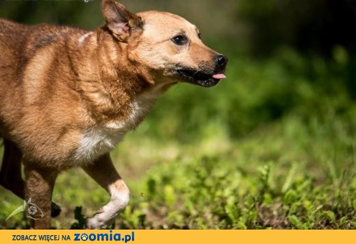 MARIUSZ - super pies i już !!!,  lubelskie Lublin