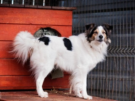 OTOZ Animals - Majki - piękny psiak...czy w końcu uda mu się zaufać?