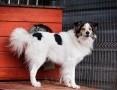 'OTOZ Animals - Majki - piękny psiak...czy w końcu uda mu się zaufać?