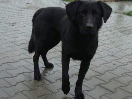 Czarnuszek - śliczny psiak czeka na dom