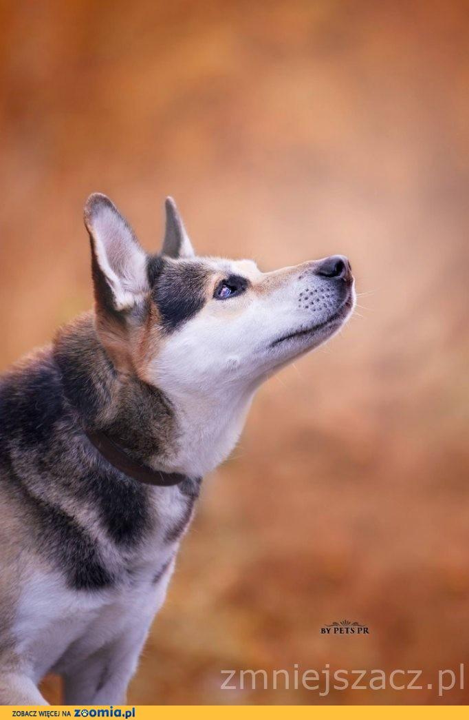 Podaruj psu , który tyle w życiu wycierpiał to, co najcenniejsze - własny dom i miłość!