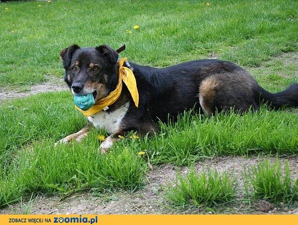 Canis, wulkan energii i radości, czeka na ukochanego Pana_Panią !