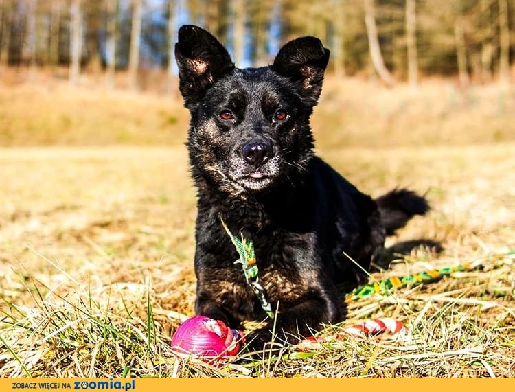 Gustaw - kawał fajnego psa z werwą! :)