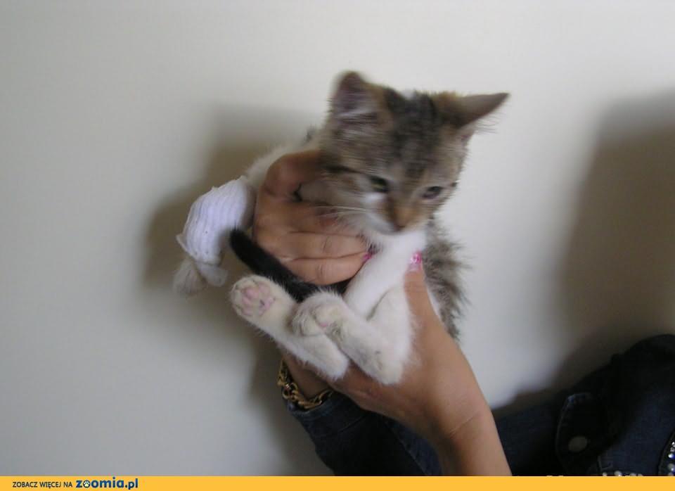 Koci maluszek Misio szuka domku