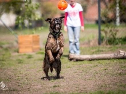 Londi psia jedynaczka czeka na swój dom   małopolskie Kraków