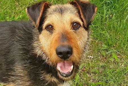 TOBY - piękny, kochany psiak w typie terriera do adopcji,  mazowieckie Warszawa