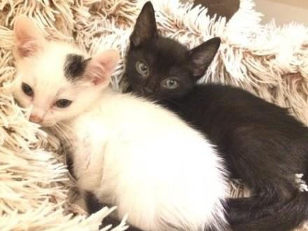 Braciszki jeden czarny drugi biały