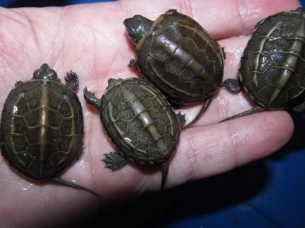 Żółwie wodne i lądowe